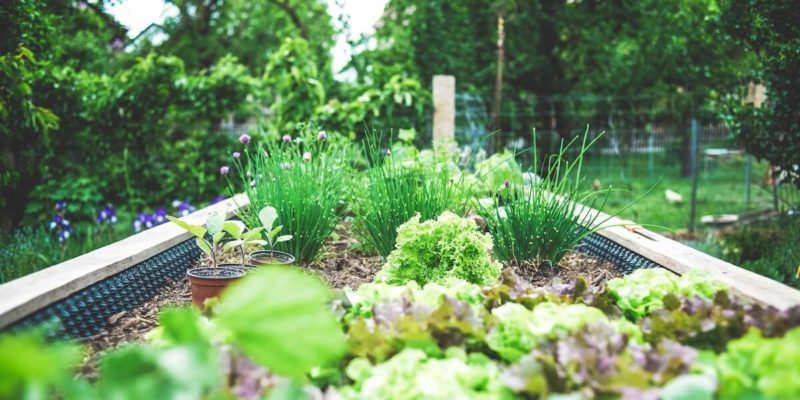20 Landscaping Trends For 2021 Jmf Landscaping Company And